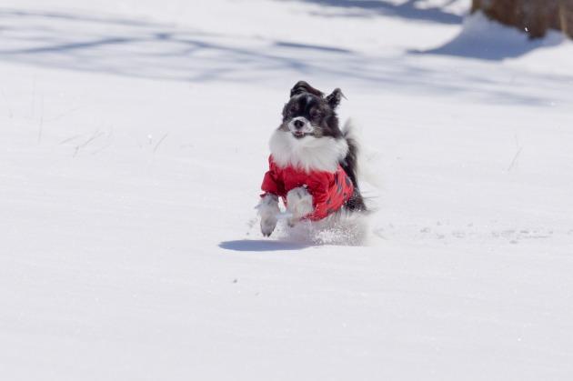 雪原で大暴れ!-008
