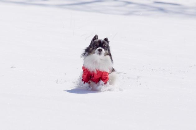 雪原で大暴れ!-010