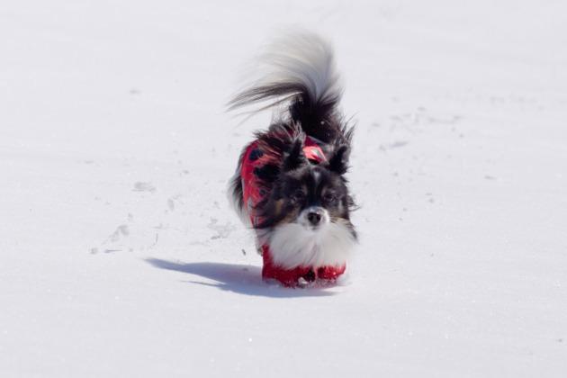 雪原で大暴れ!-015