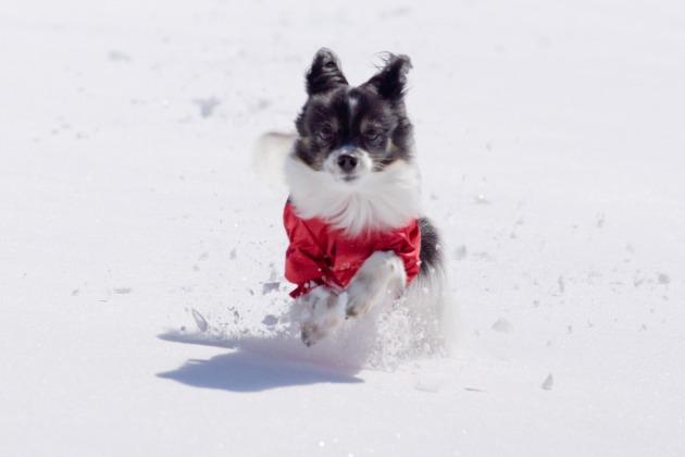 雪原で大暴れ!-016