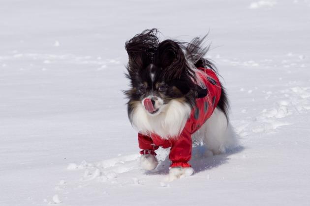 雪原で大暴れ!-018