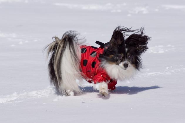 雪原で大暴れ!-020