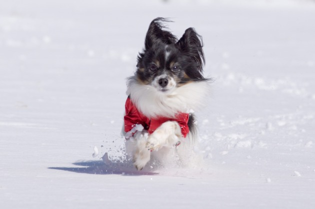 雪原で大暴れ!-021