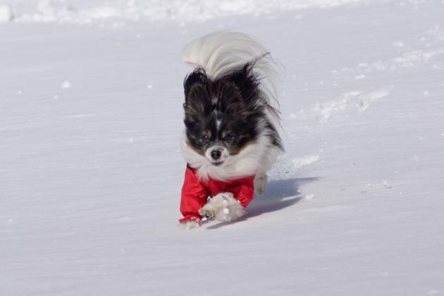 雪原で大暴れ!-022