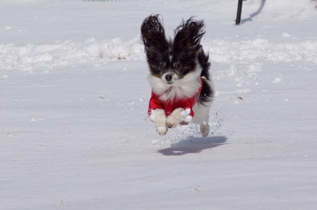 雪原で大暴れ!-023