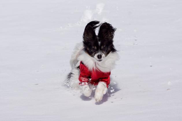 雪原で大暴れ!-024