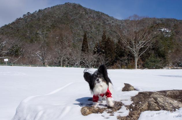 雪原で大暴れ!-027