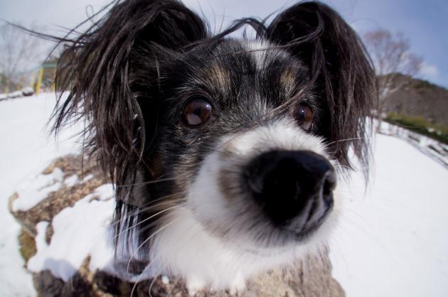 雪原で大暴れ!-030