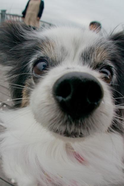 おやつおねだり犬-015