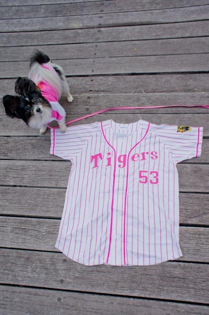 阪神タイガース犬-003