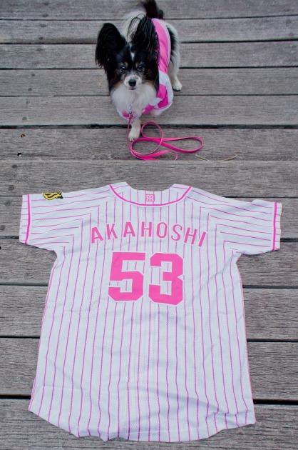 阪神タイガース犬-004