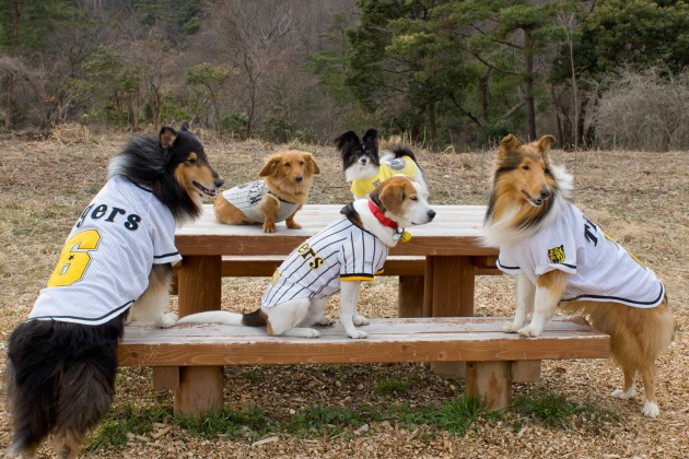 阪神タイガース犬-007