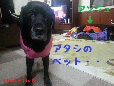 20140124marine5.jpg