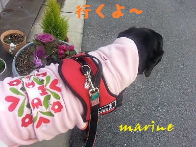 20140125marine1.jpg