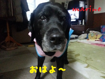 20140128marine1.jpg