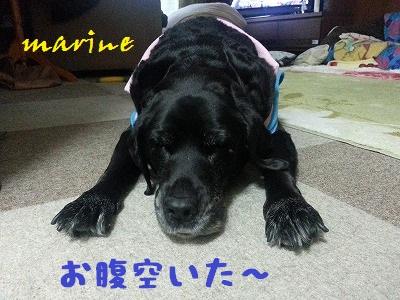 20140128marine2.jpg