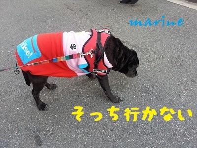 20140128marine4.jpg