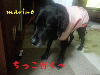 20140204marine2.jpg