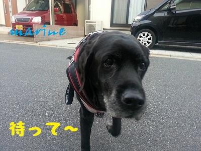20140213marine5.jpg