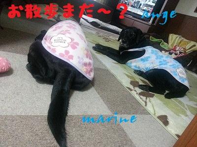 20140213marineange2.jpg