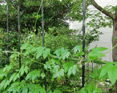 okisuzu2011--8-23.jpg