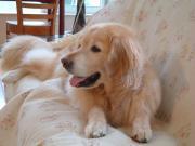 愛犬2006年7月25日+002_convert_20120620134418