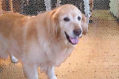 愛犬2006年7月25日-005-のコピー