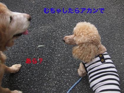 th_IMG_3022−1
