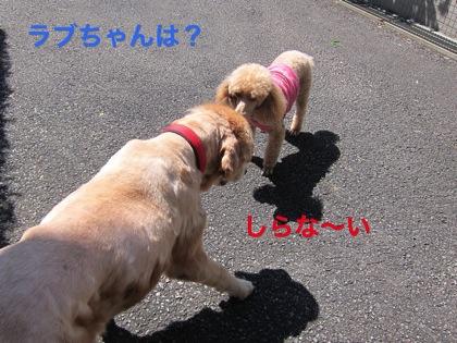 th_IMG_3184−11