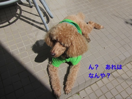 th_IMG_3412−1