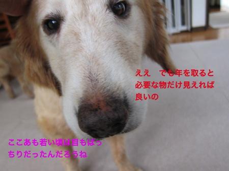 th_IMG_3671−1