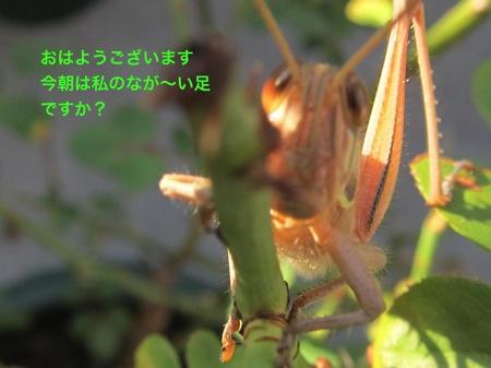 th_IMG_3726−1