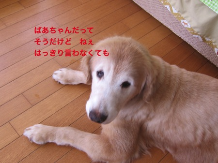 th_IMG_3948−1