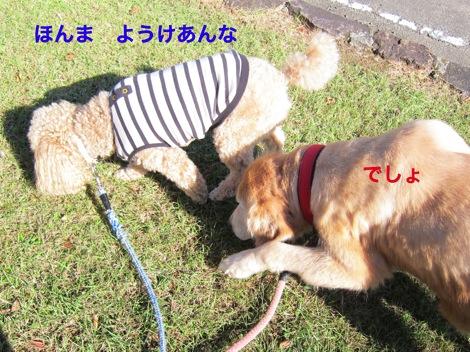 th_IMG_4140−1