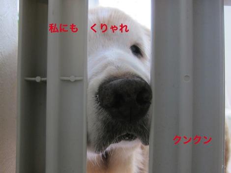 th_IMG_4314−1