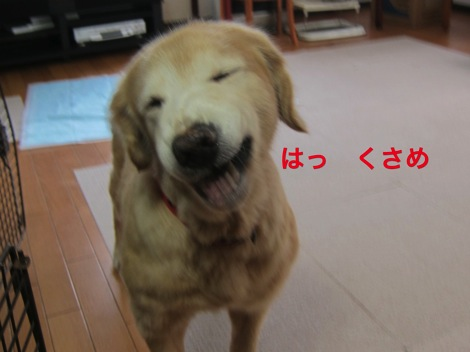 th_IMG_4330−1
