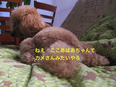 th_IMG_4679−1