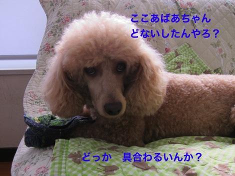 th_IMG_4670−1