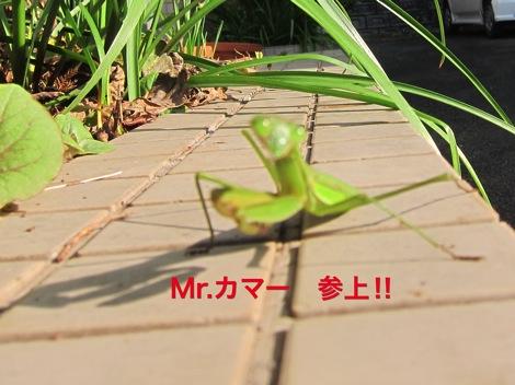 th_IMG_4704−1