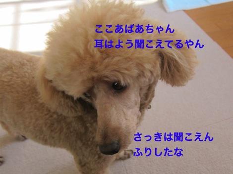 th_IMG_4694−1