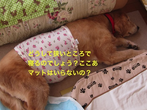 th_IMG_4689−1