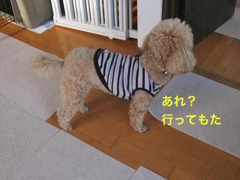 th_IMG_5011¥1