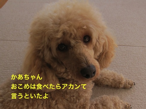 th_IMG_5069¥1