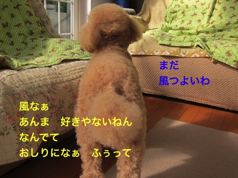 th_IMG_5072¥1