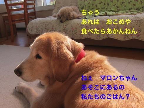 th_IMG_5099¥1