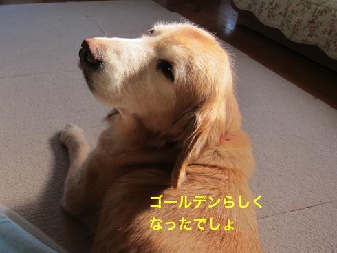 th_IMG_5107¥1