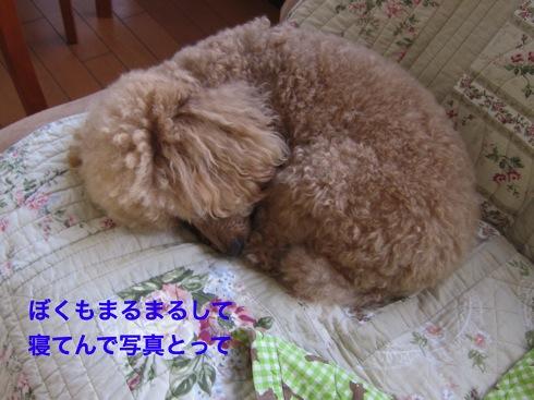 th_IMG_5110¥1