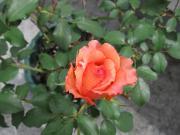 IMG_0255_convert_20120619142225.jpg