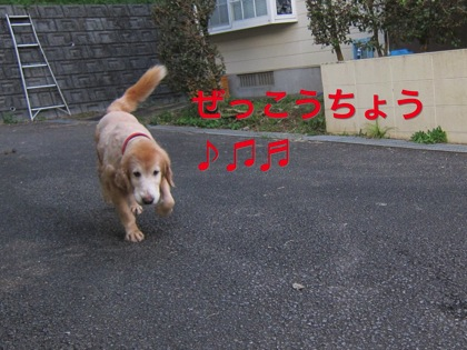 th_IMG_3060.jpg