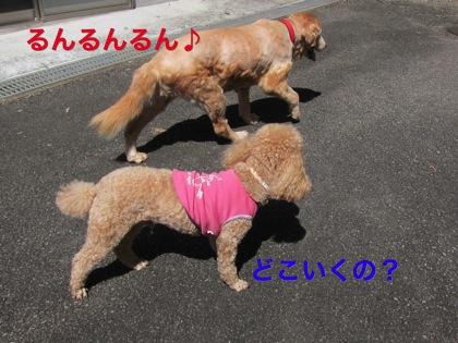 th_IMG_3182.jpg